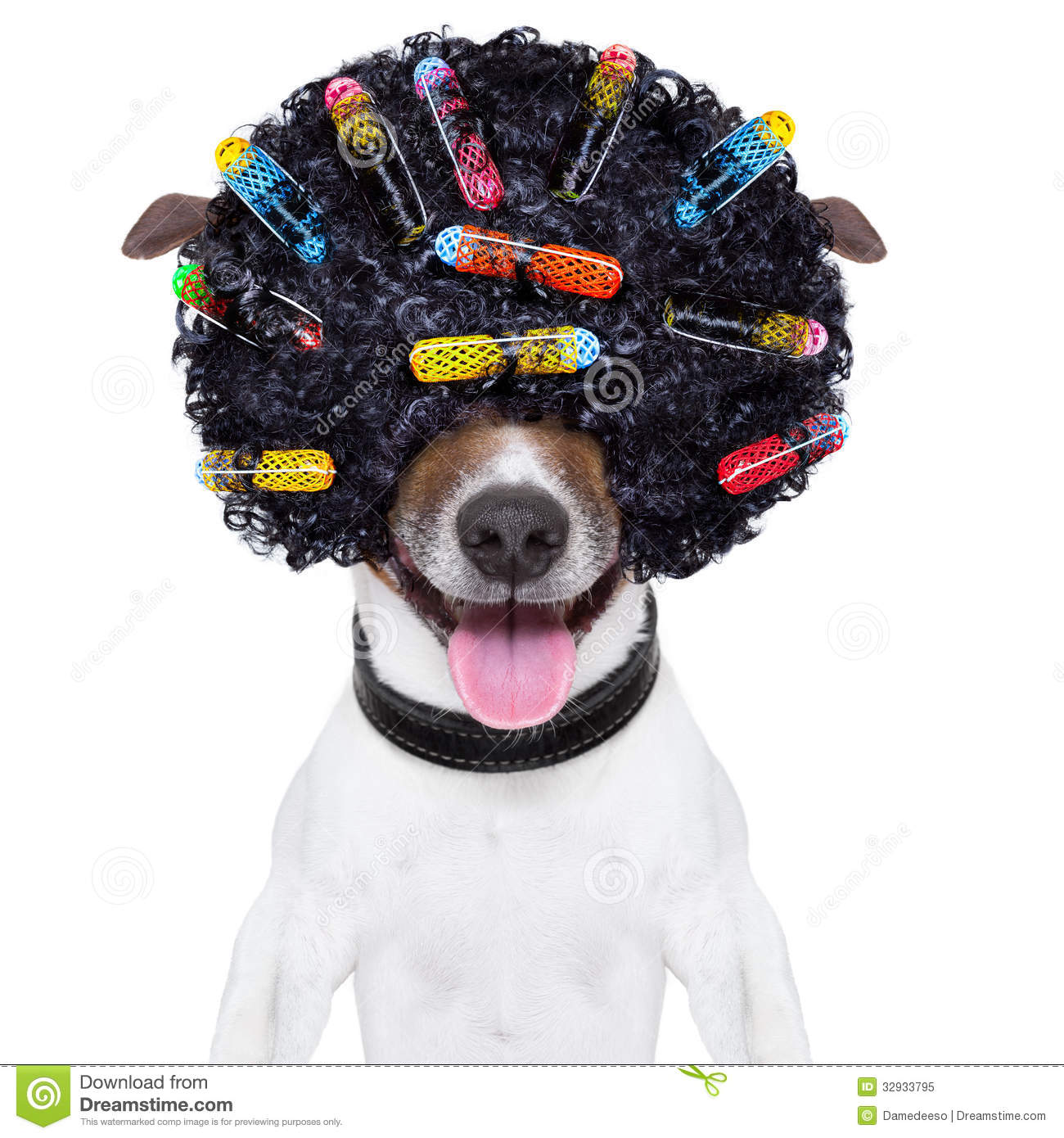 Crazy Curly Hair Dog Stock Image. Image Of Hairstyle