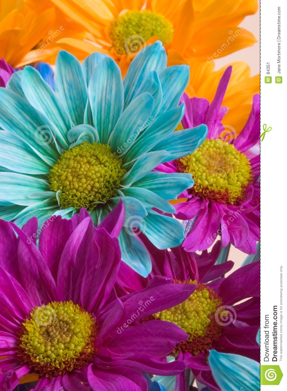 Crazy Daisies Stock Image Image Of Color Crazy Colour 84351