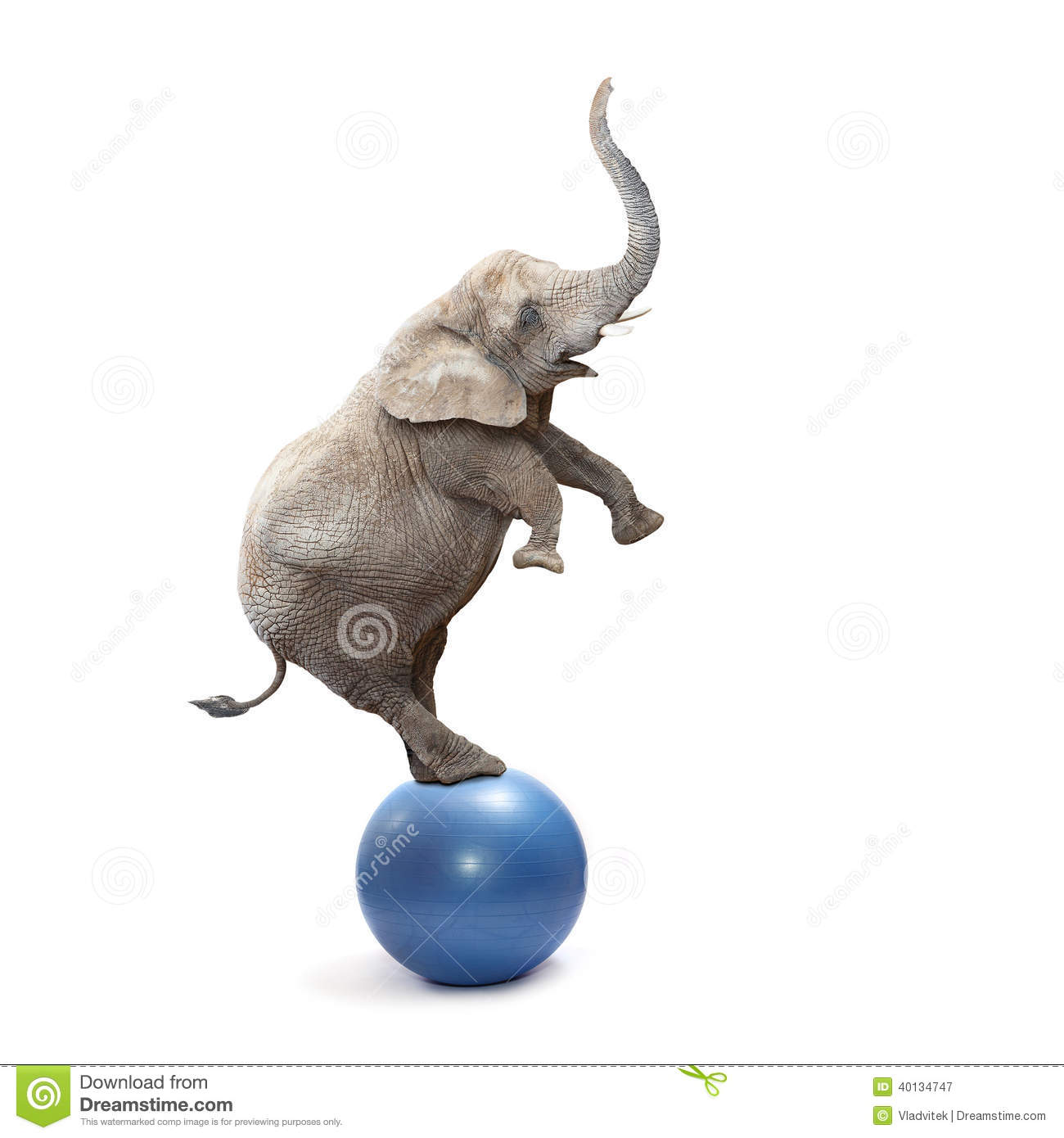 Crazy elephant stock photo image 40134747
