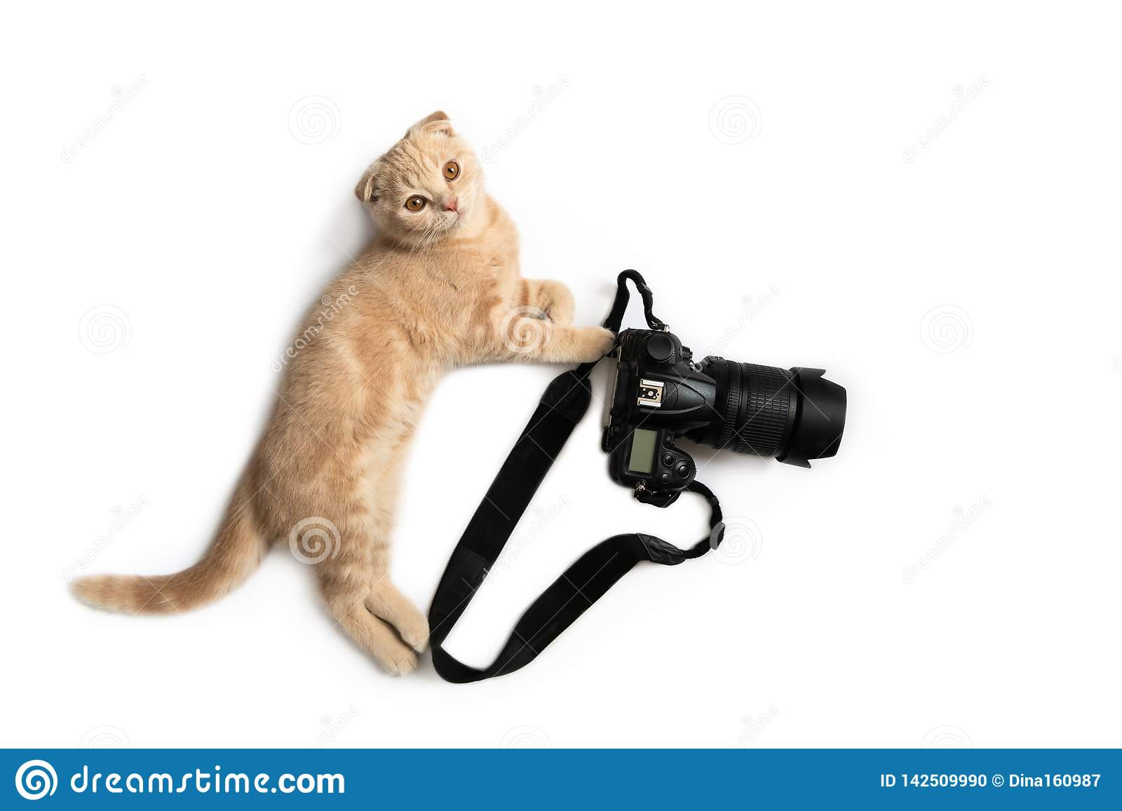 Crazy photographer. Funny cat with camera isolated on white background. Creative concept for World photography day, banner,
