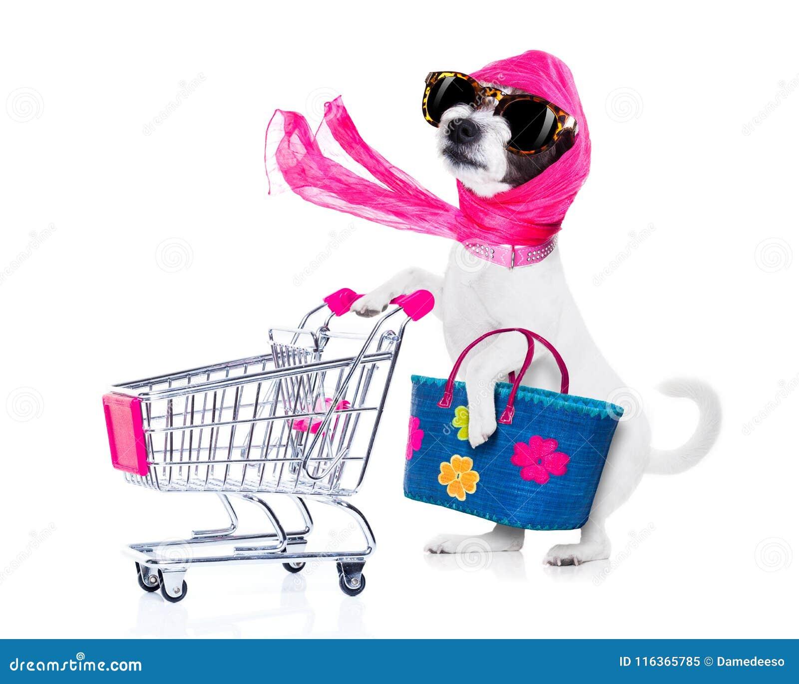 Shopping dog diva