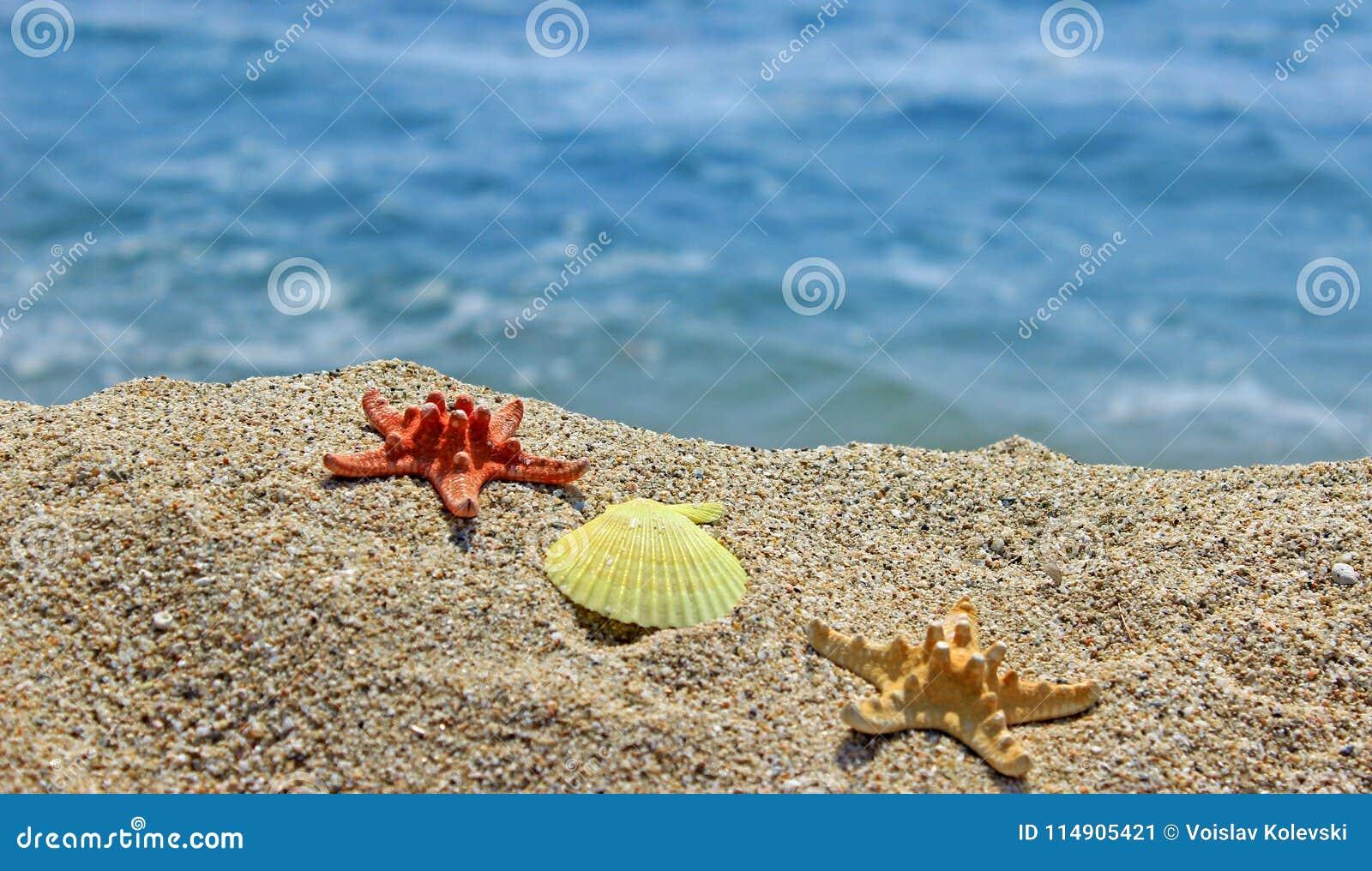 Creación del verano en la playa con las criaturas naturales del mar