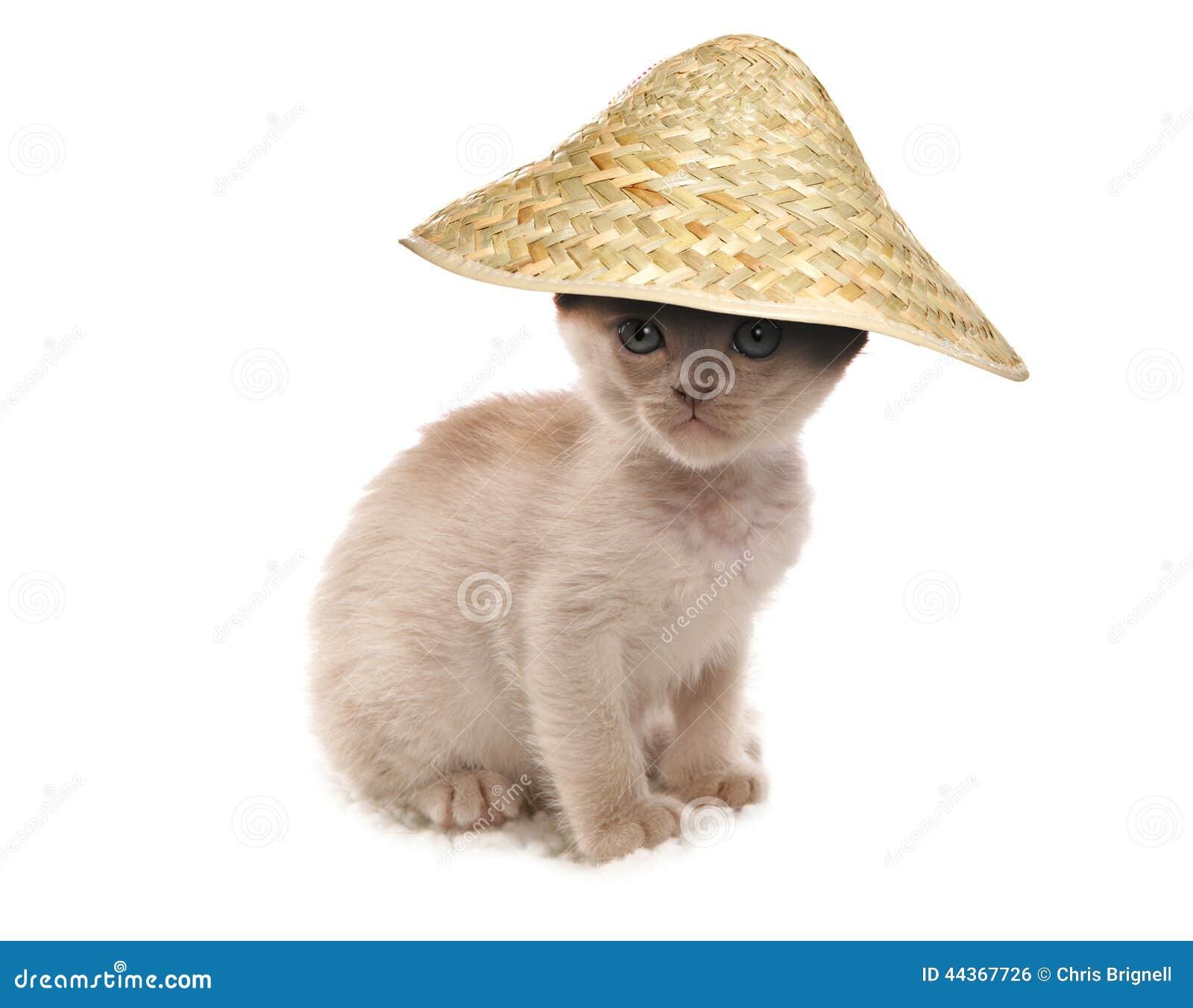 Pet Hats Cats
