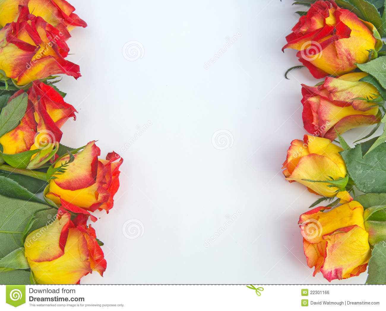 Cream And Red Rose Border. Royalty Free Stock Image - Image: 22301166