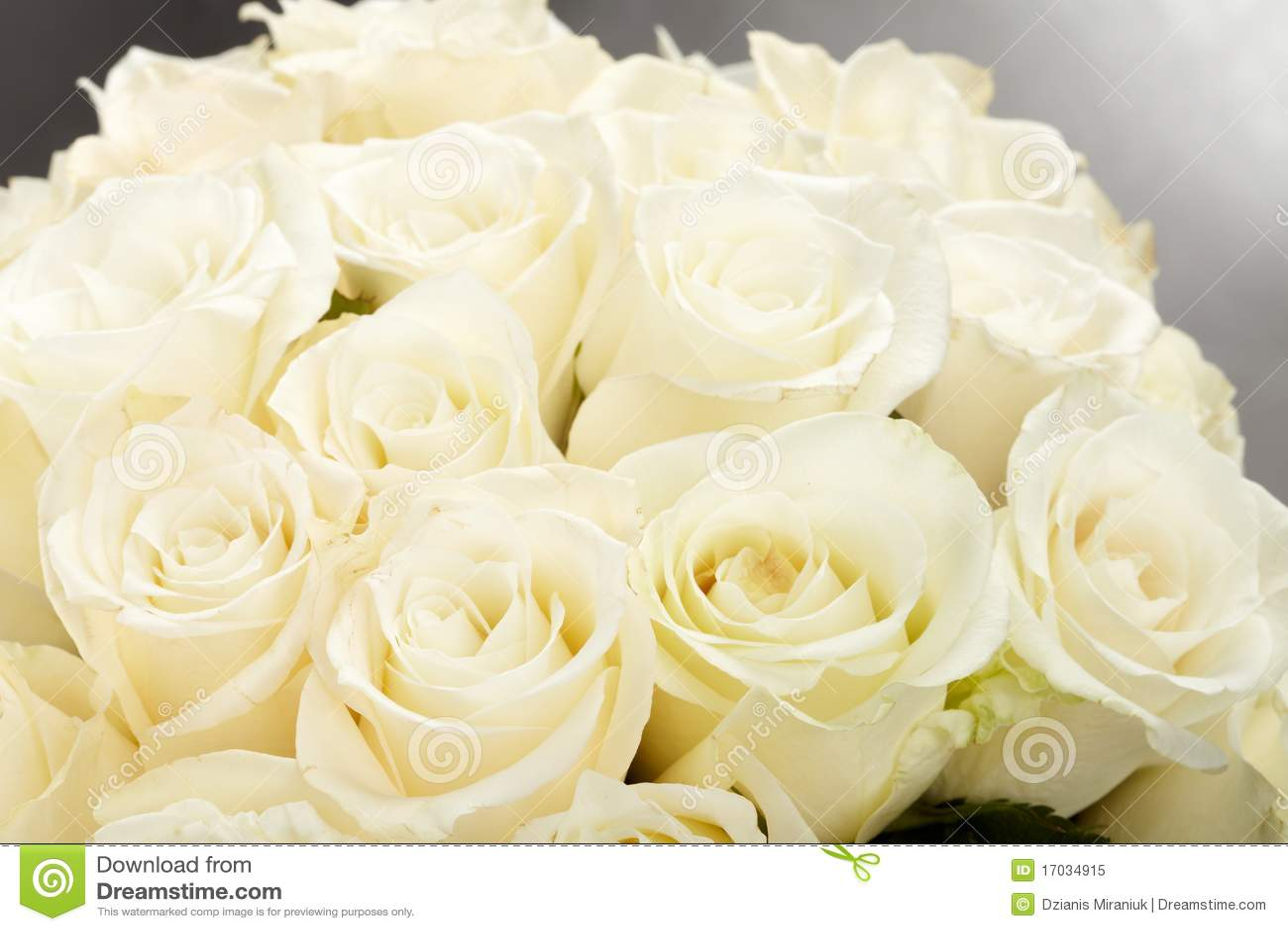 Cream Roses Royalty Free Stock Photo