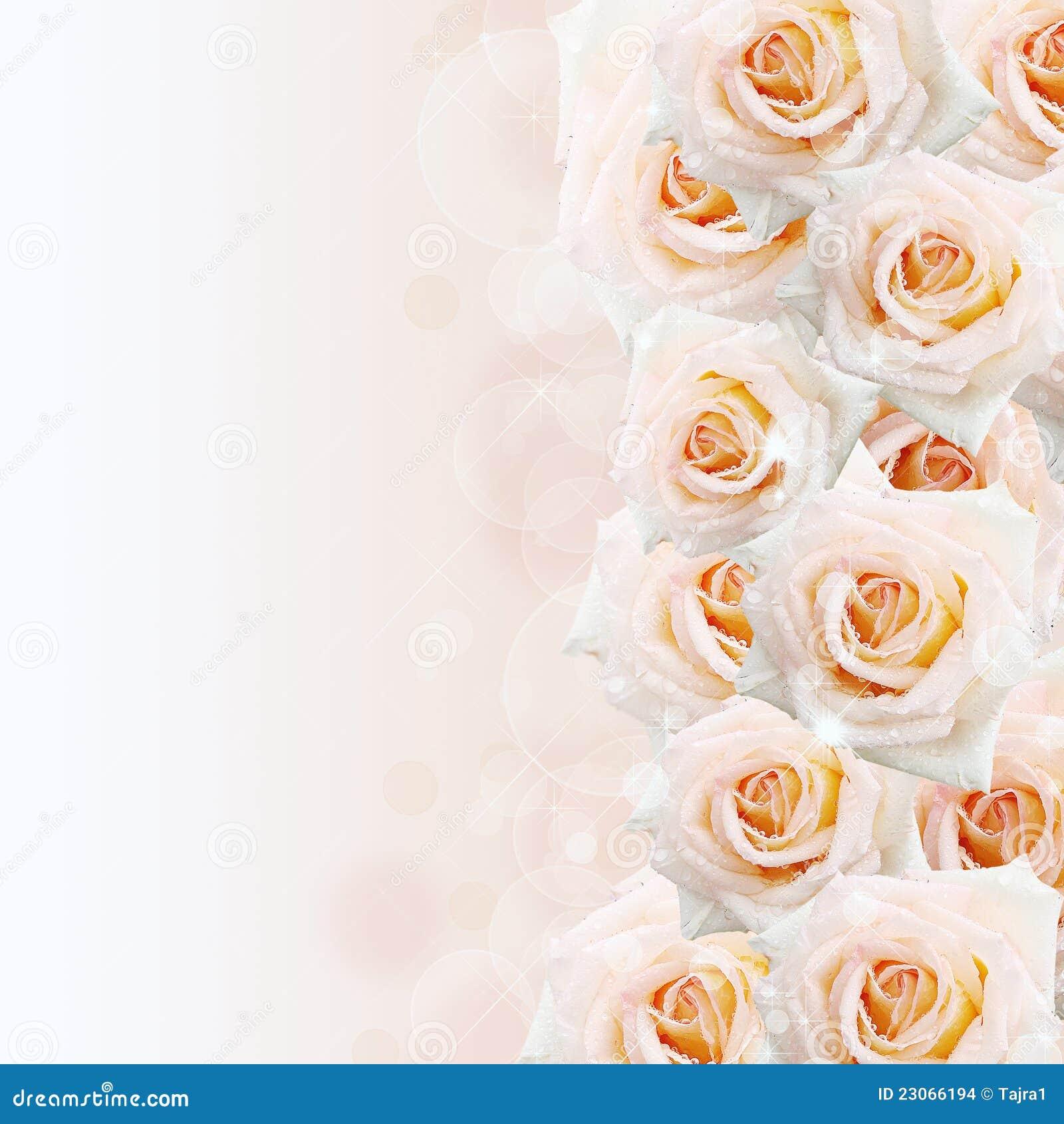 Cream roses background stock images image 23066194 for Cream rose wallpaper