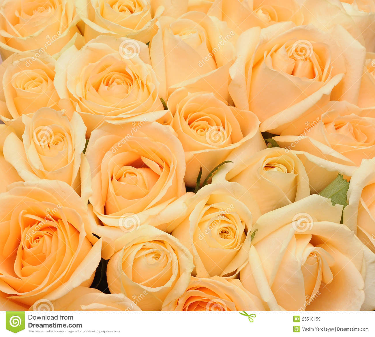 Cream Roses Background Royalty Free Stock Images - Image: 25510159