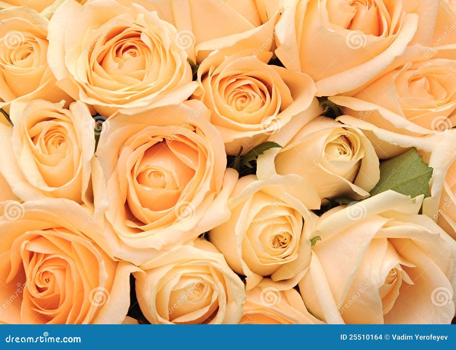 Cream Roses Background Stock Images Image 25510164