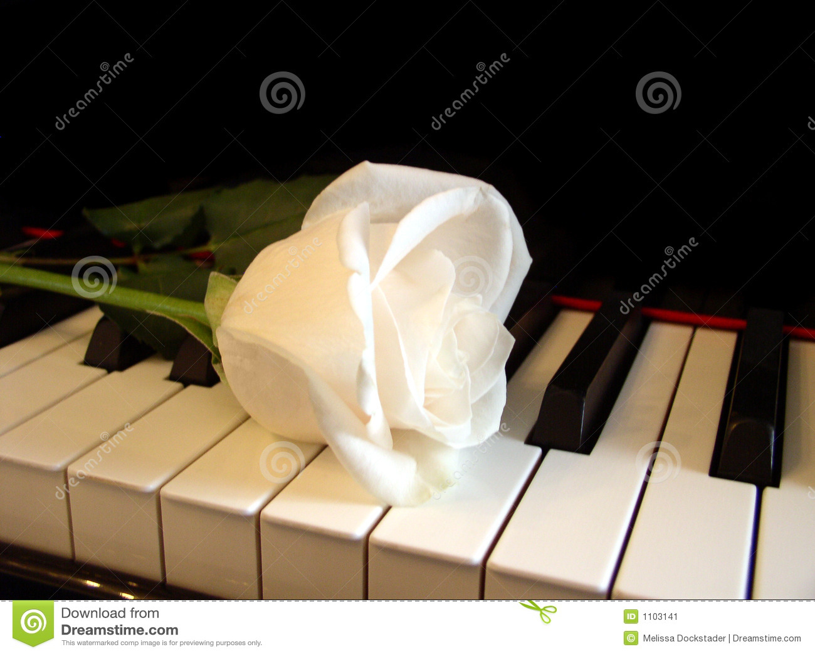 Cream White Rose On Piano Keys Stock Image - Image of ...