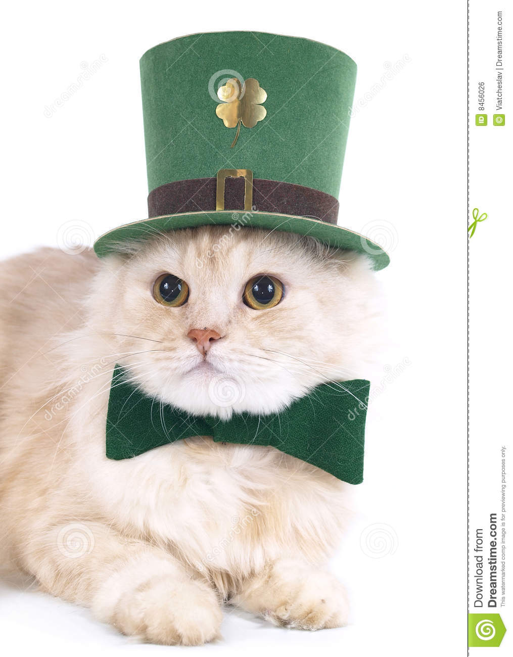 Creamy St. Patrick's Day Cat Royalty Free Stock Image - Image: 8456026