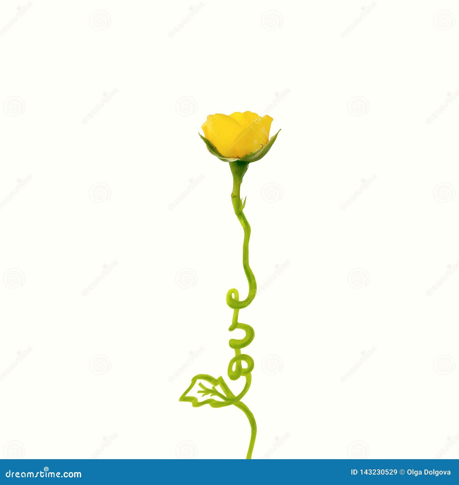 Creatief die concept van gele roze bloem met woordliefde wordt gemaakt Vlak leg Het concept van de Dag van valentijnskaarten