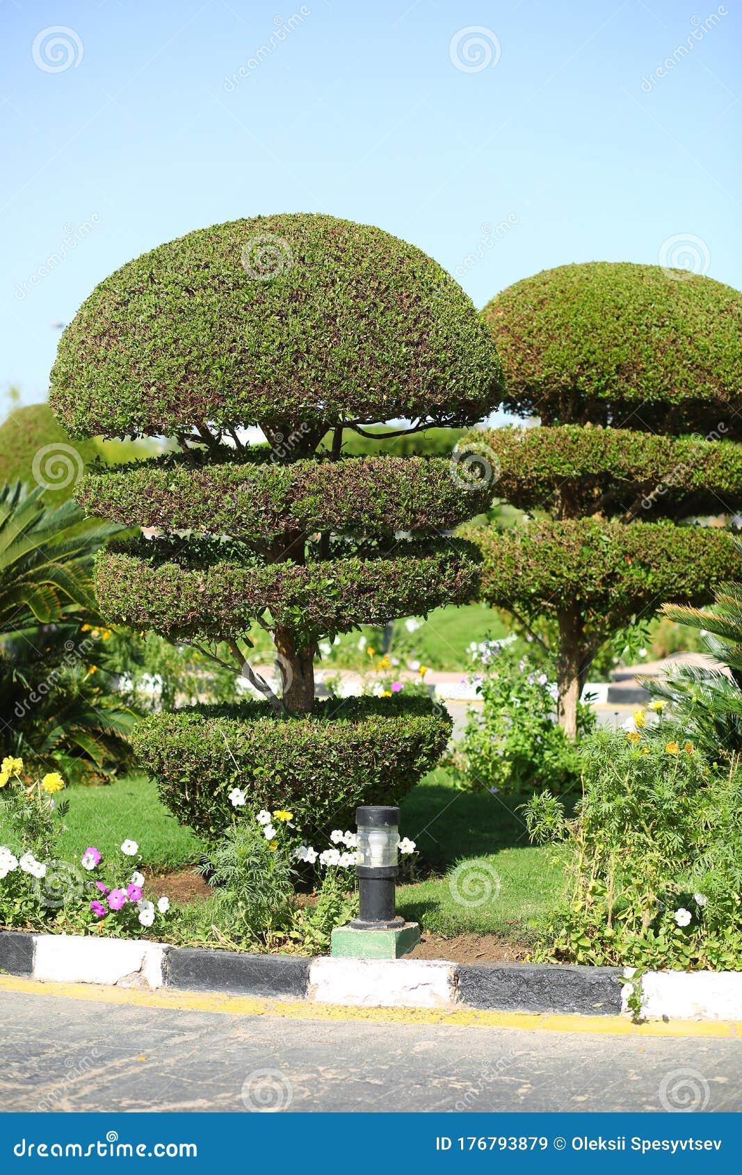 Creative Art Shape Topiary Tree Gardening Landscape Design Stock Image Image Of Sphere Garden 176793879