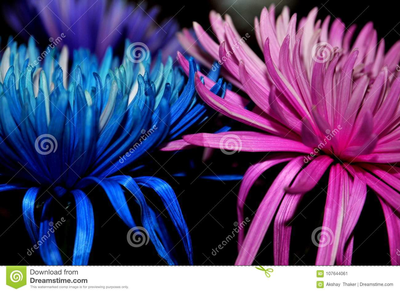 `Be Gentle, Love and Stay together` Blue and Pink flower kept together to create an inspirational image.