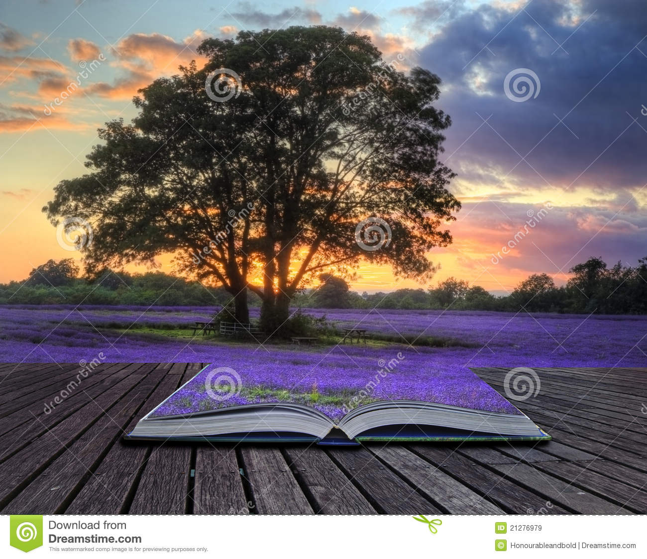 Creative concept image of lavender in sunset