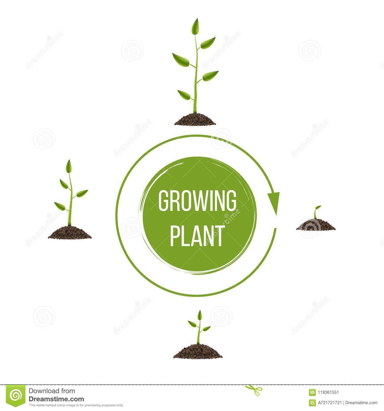 creative illustration of growth up green tree with leaf isolated on  background  business cycle diagram