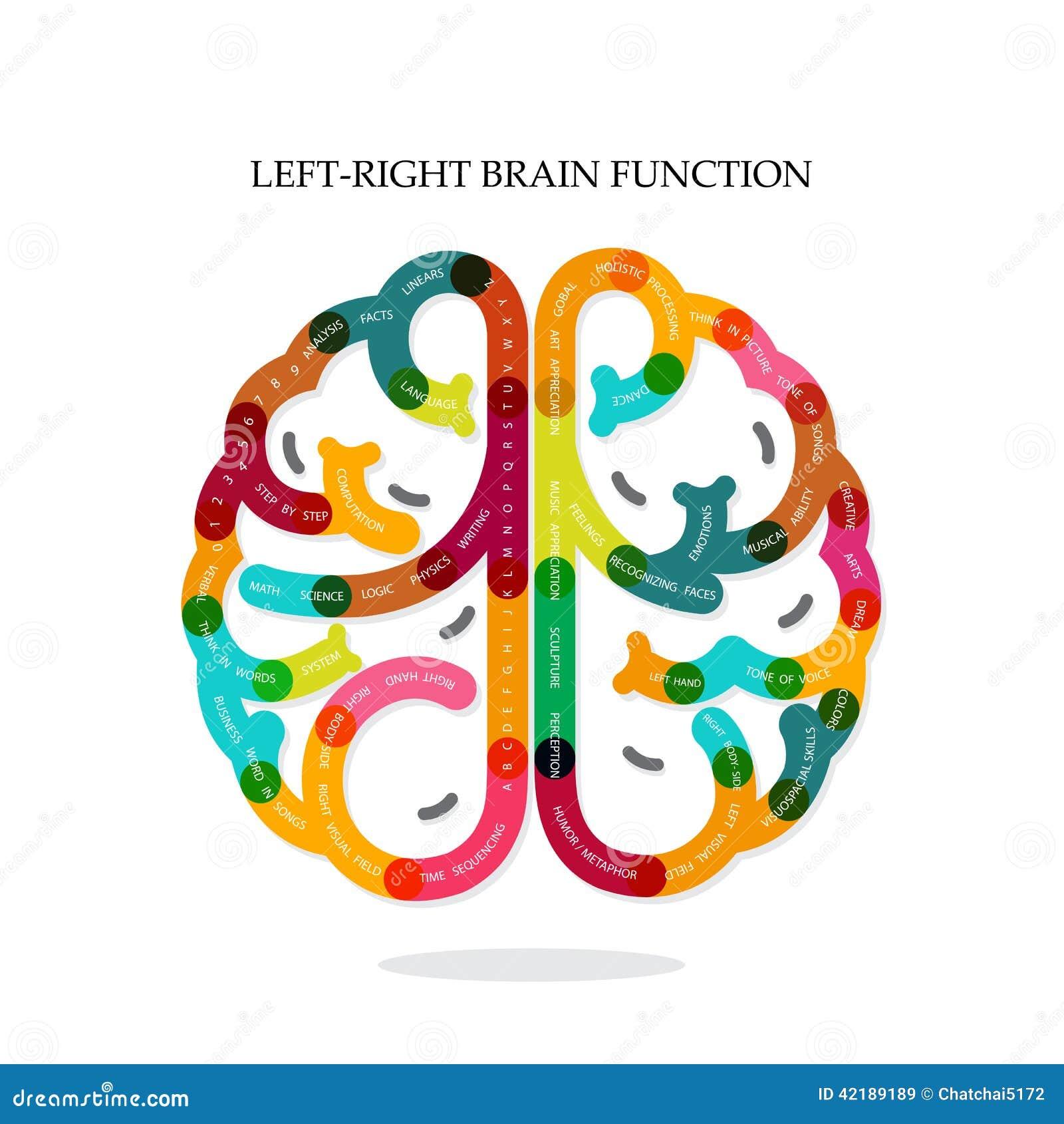 right brain left brain functions MEMES
