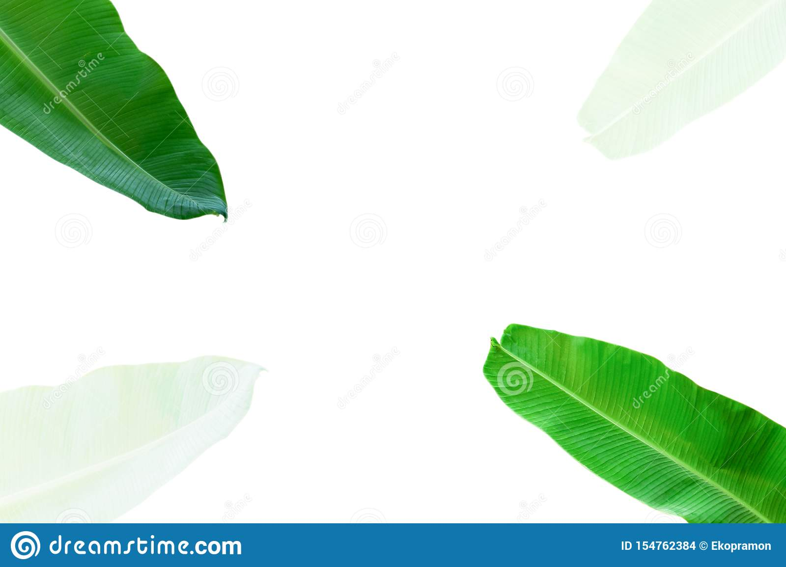 creative layout made of flowers and banana leaves with