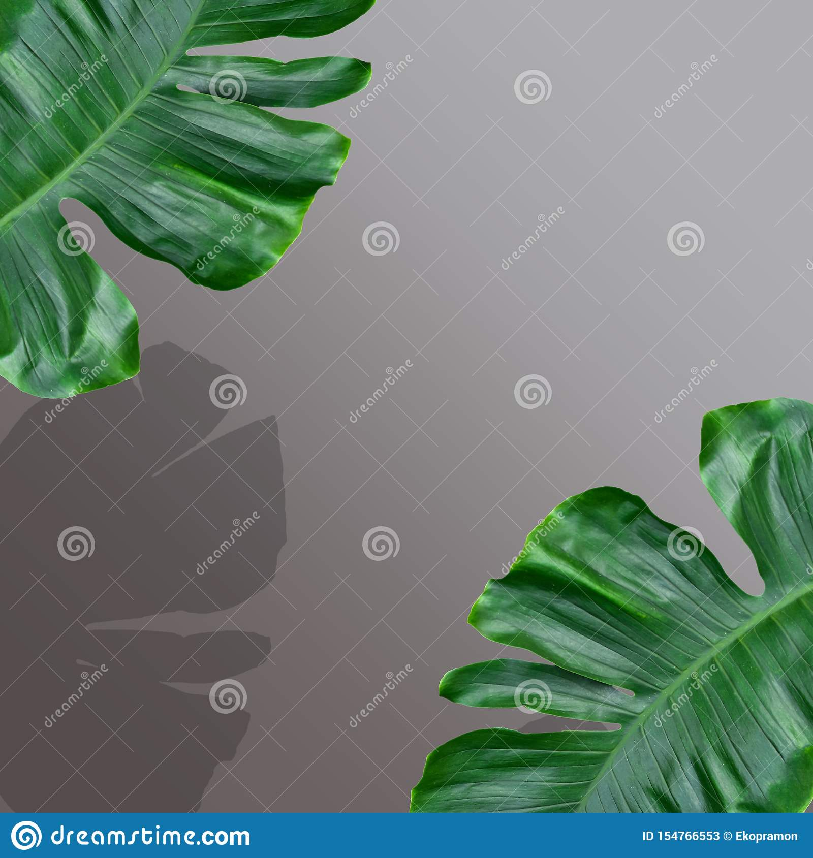 Creative Layout Made Of Monstera Leaves Flat Design Stock Image Image Of Flower Decoration 154766553 Floral seamless pattern foliage seamless pattern design with pastel color tropical leaves pattern background. dreamstime com