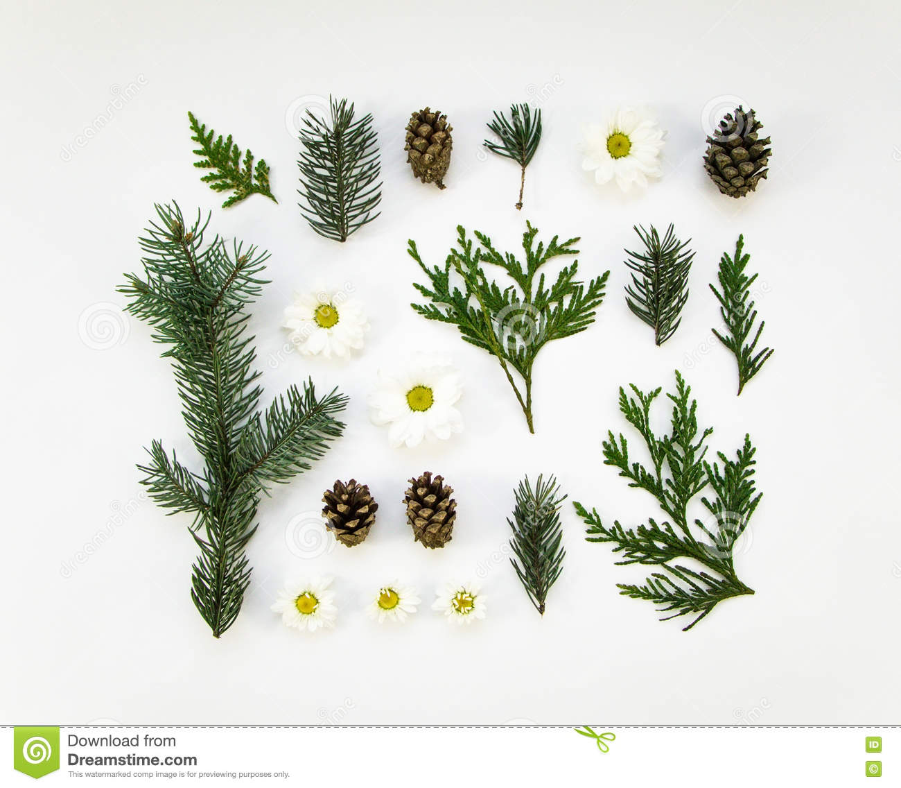 Creative natural layout of winter plants parts on white background creative natural layout of winter plants parts on white background flat lay top view izmirmasajfo