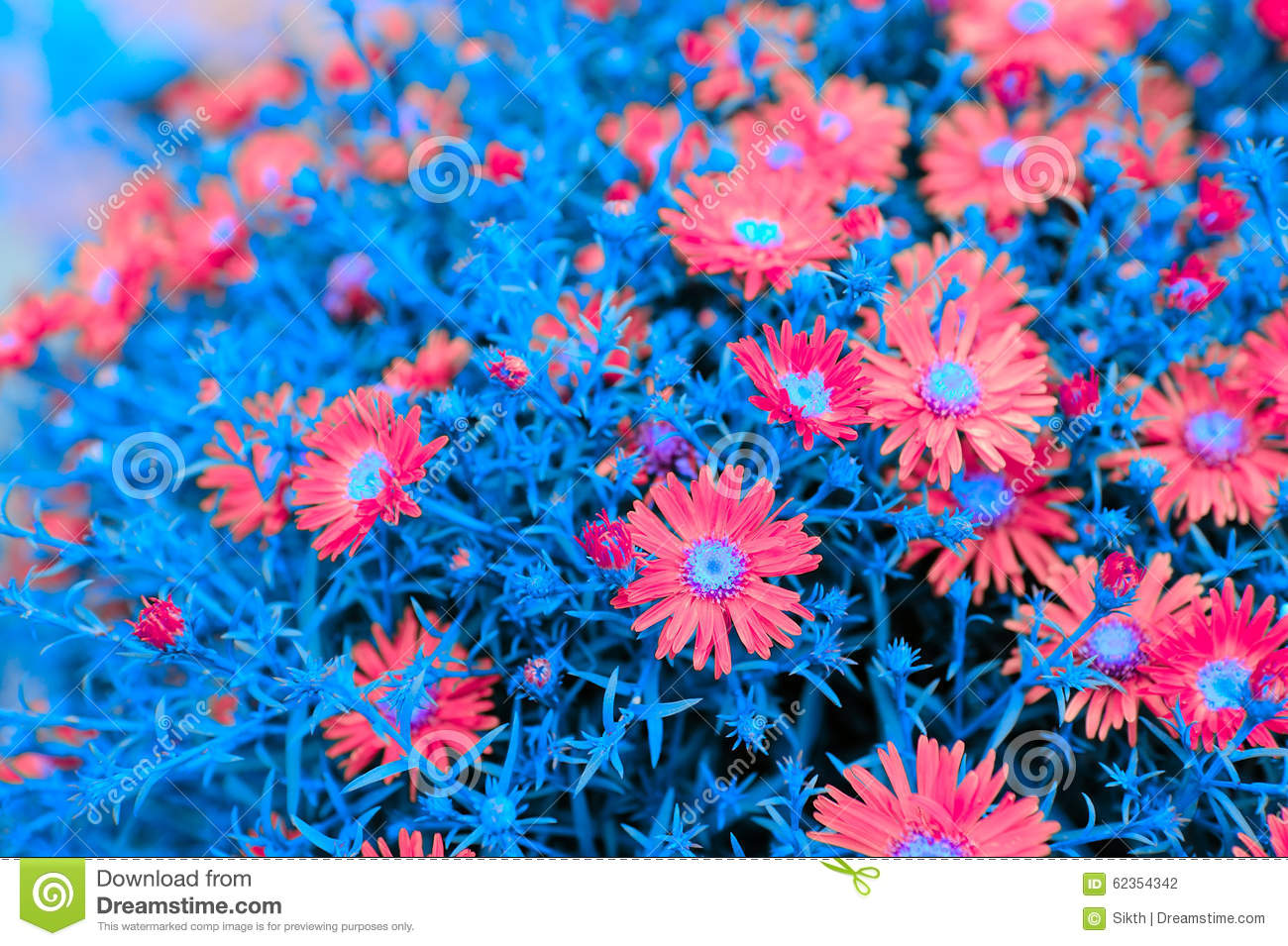 Creative New York Aster Flowers With Blue Leaves Stock Image