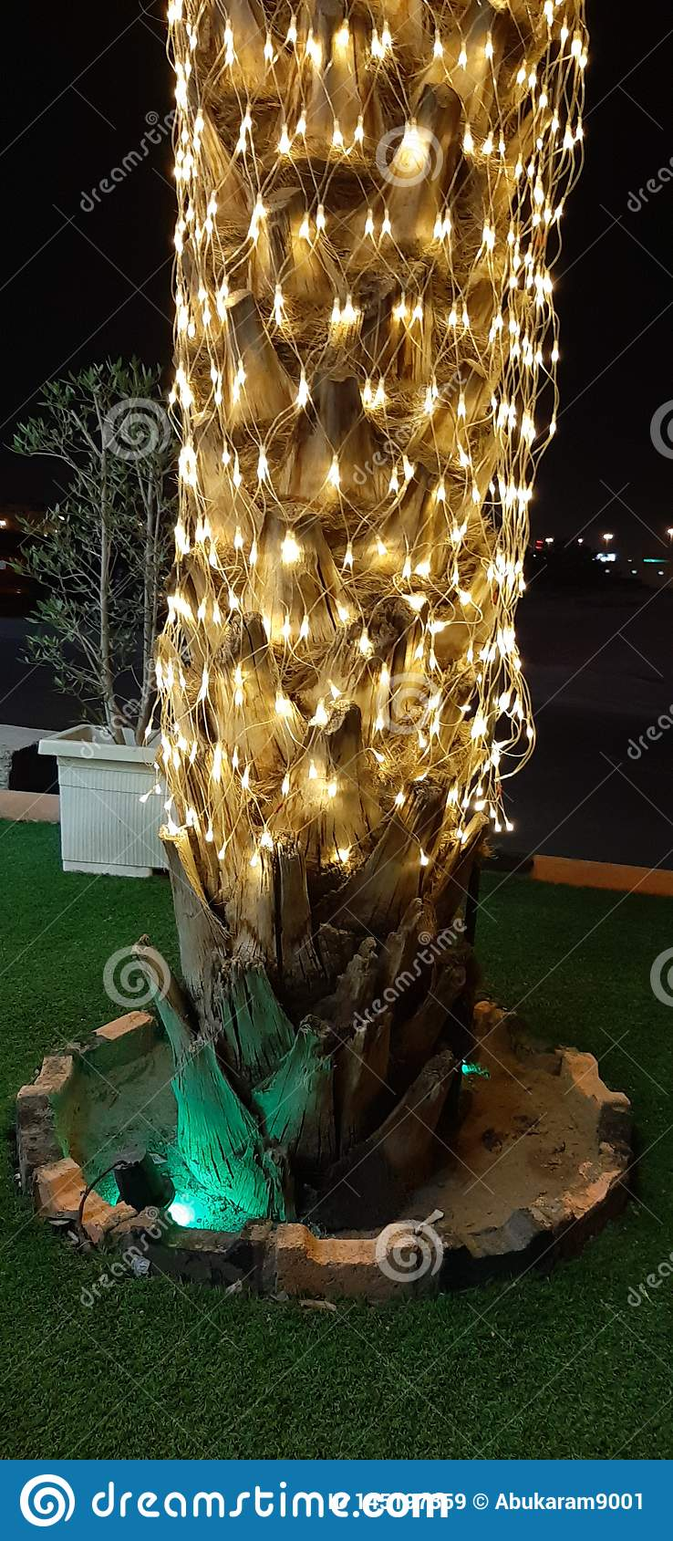 Creative palm with light in Christmas