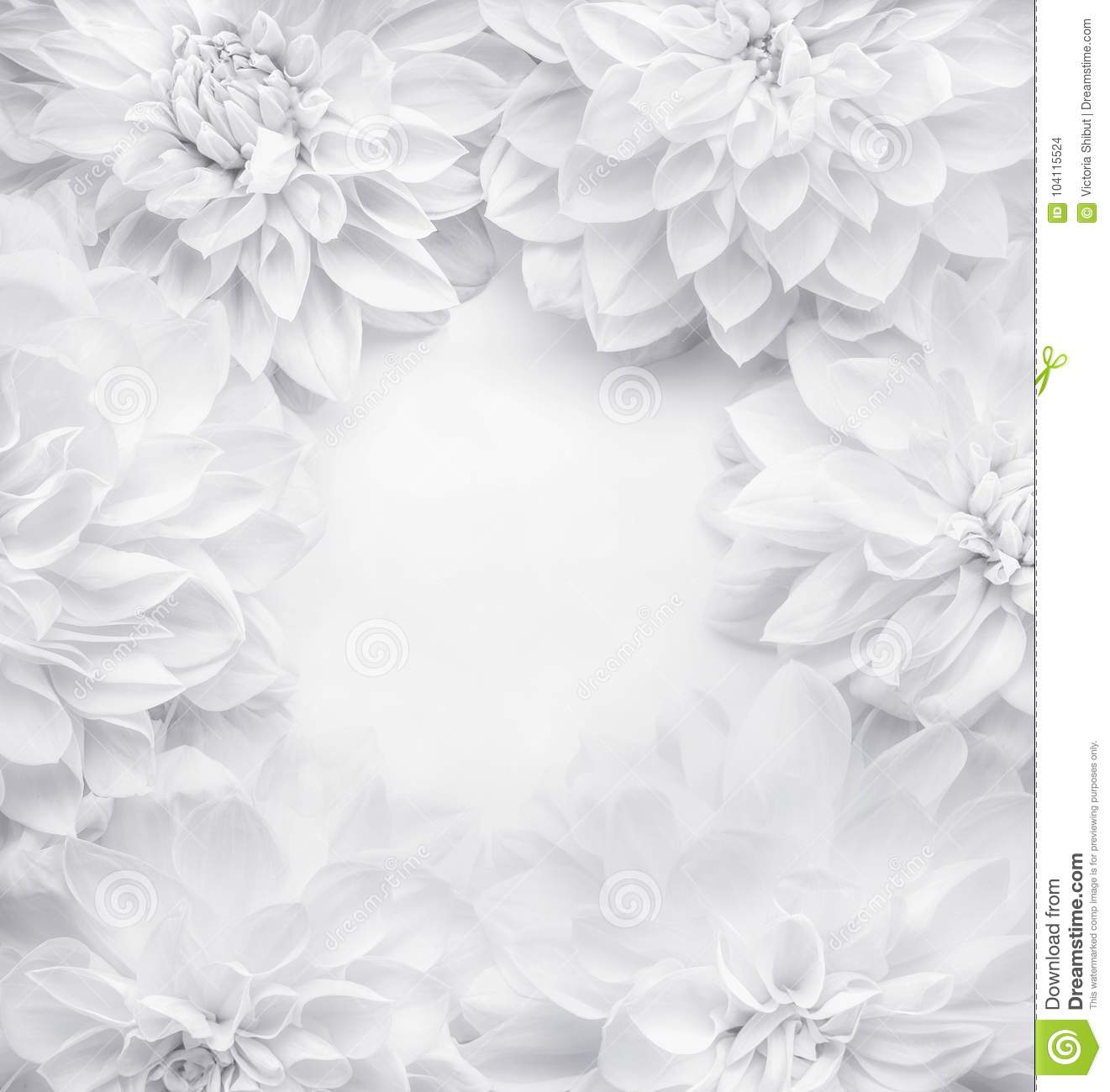 Creative white flowers frame background , floral pattern or layout for greeting card of Mothers day,birthday