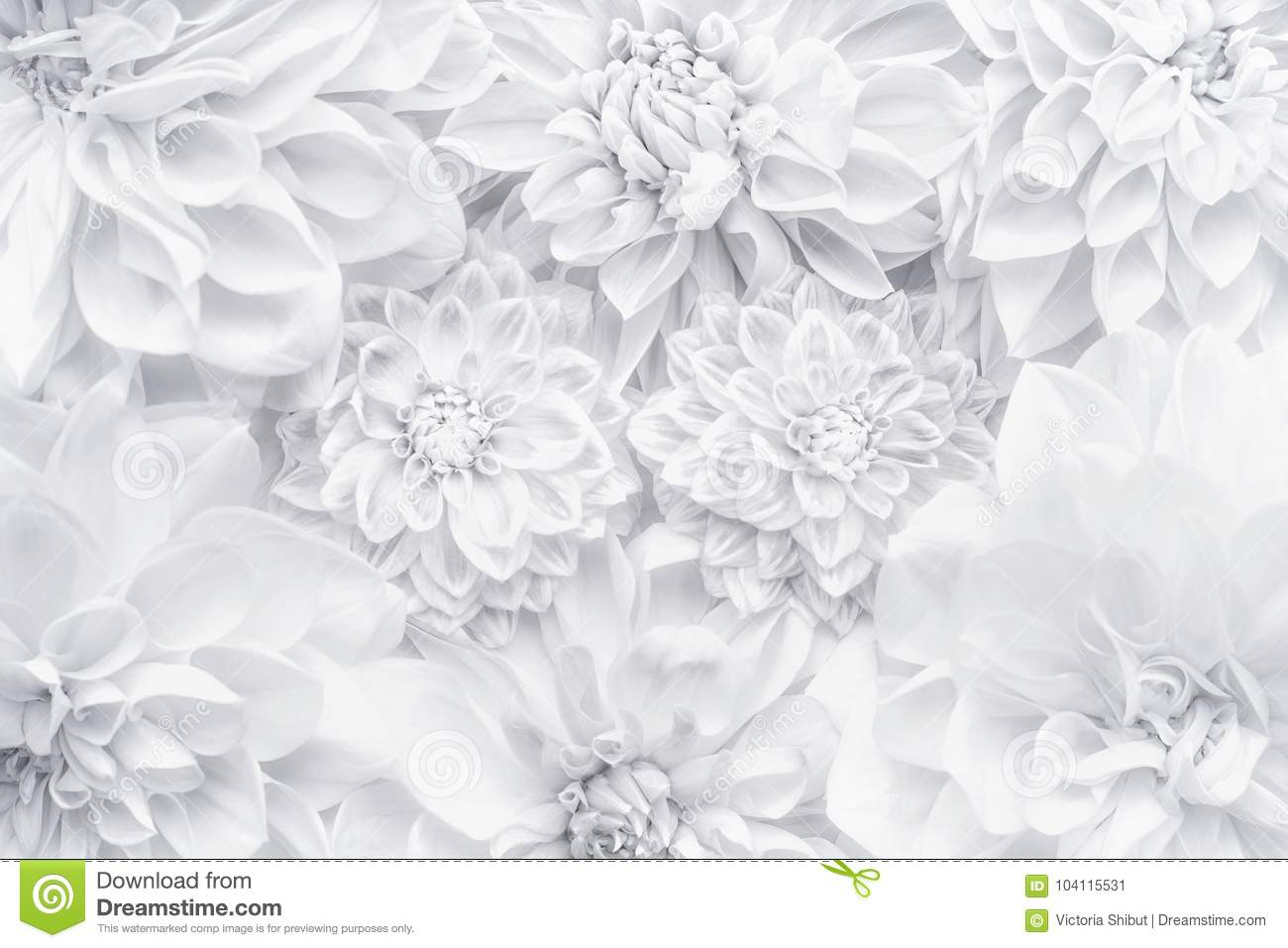 Creative white flowers layout , floral pattern or background for greeting card of Mothers day,birthday, Valentine`s Day, wedding