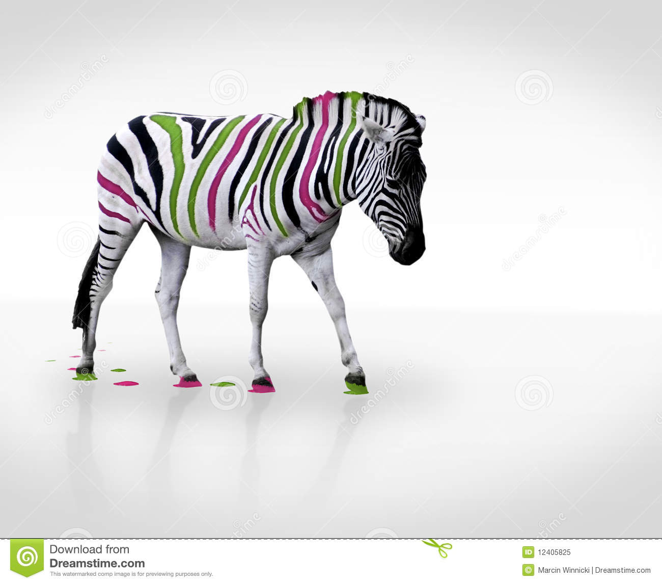 Creative Zebra Royalty Free Stock Photo - Image: 12405825