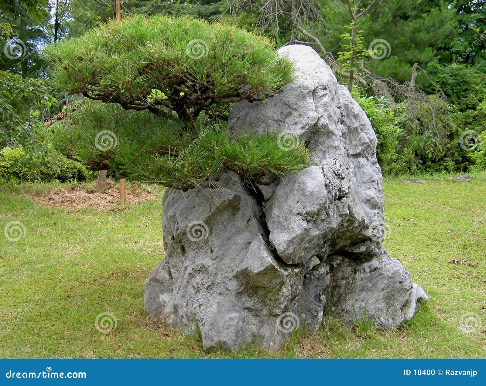Crecido a través de la roca