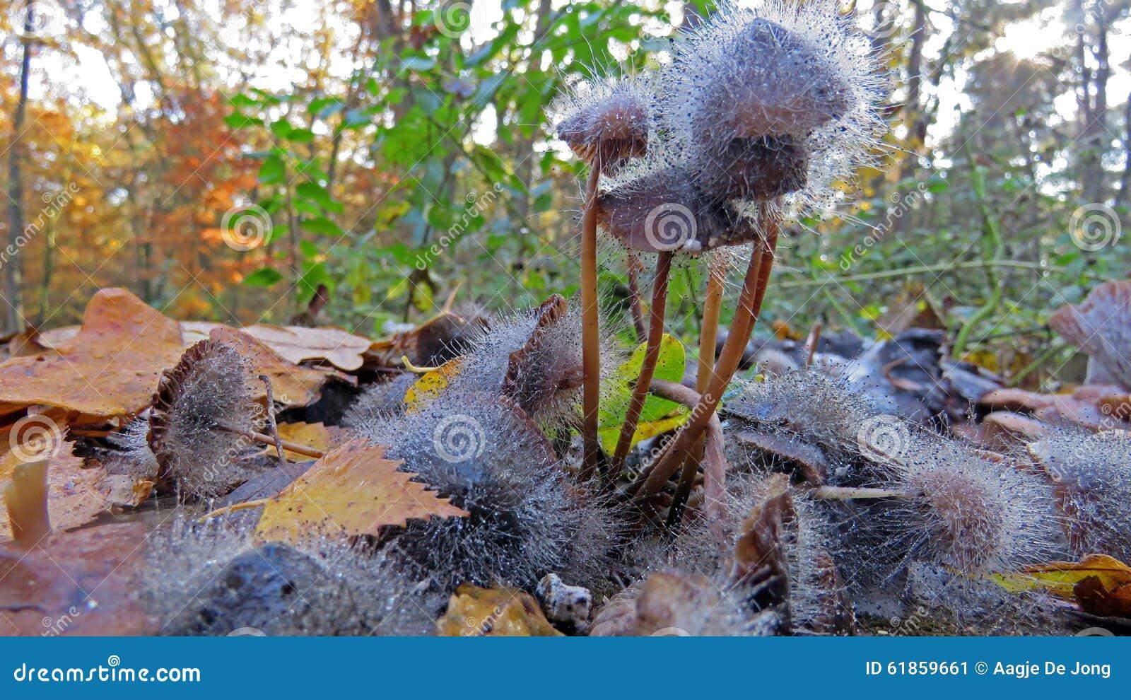 Crecimiento de molde en hongo