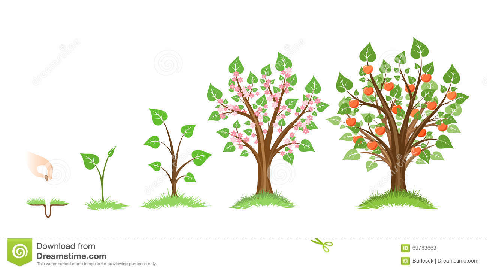 Crecimiento Del Manzano Ilustraci 243 N Del Vector Imagen