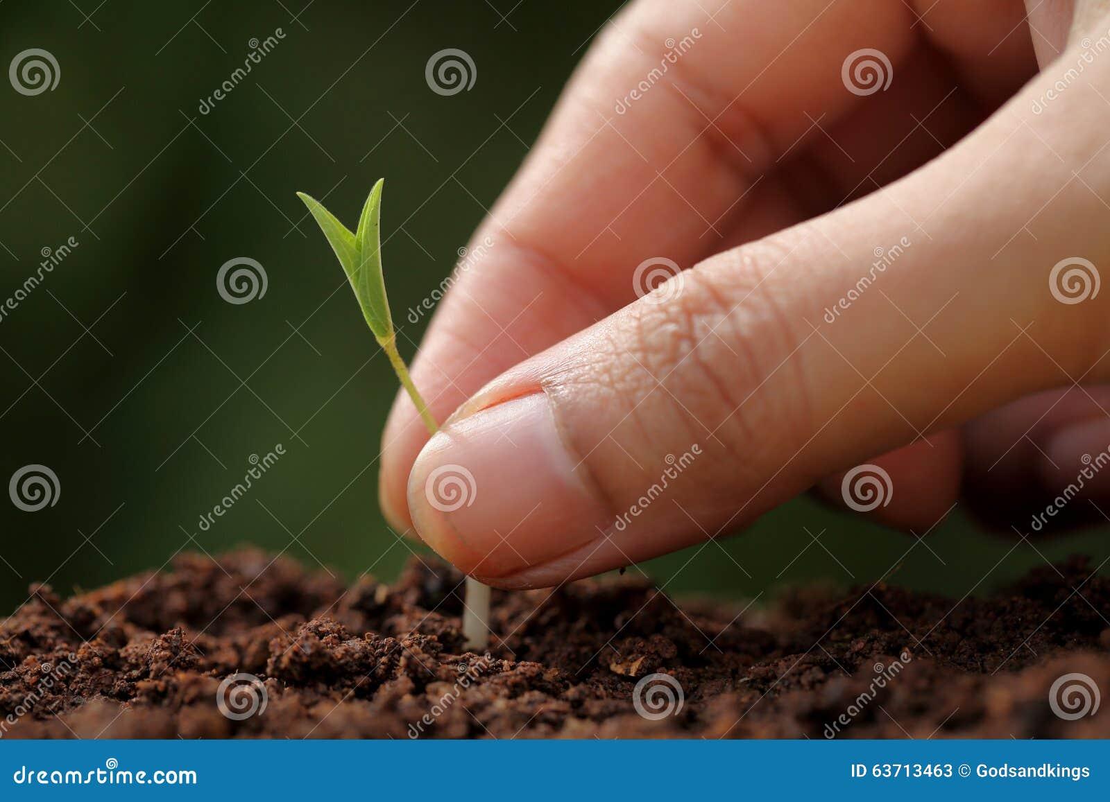 Crecimiento-nuevos principios de la planta