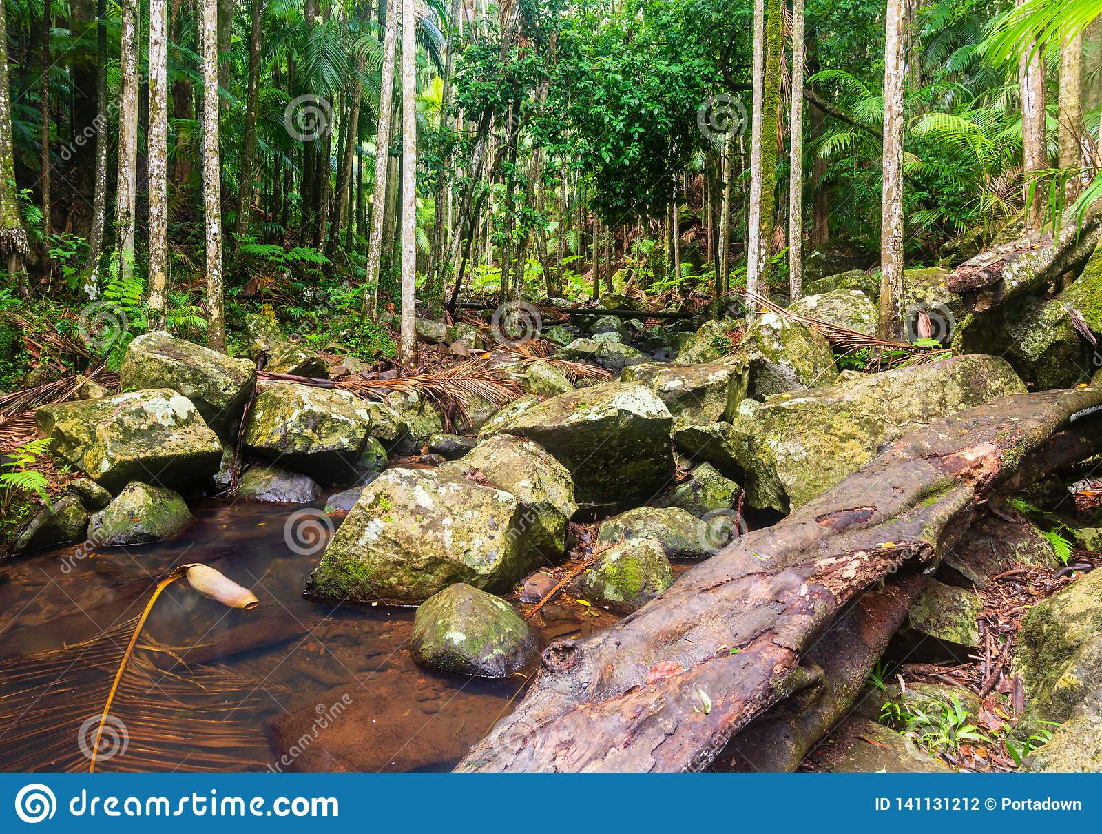 Creek in a Subtropical Rainforest - Australia