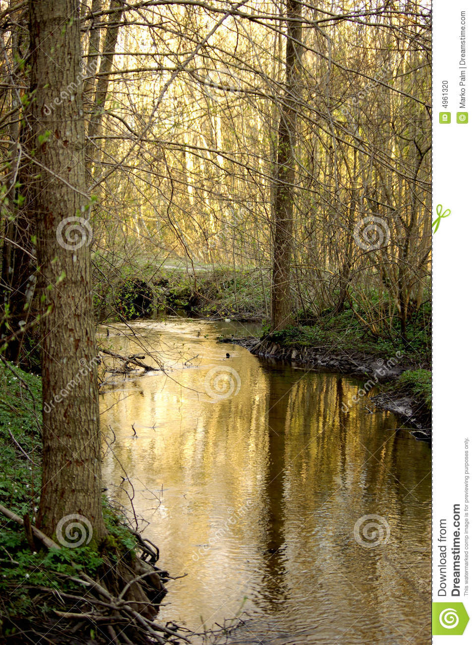Creek In Woods Stock Photo Image 4961320