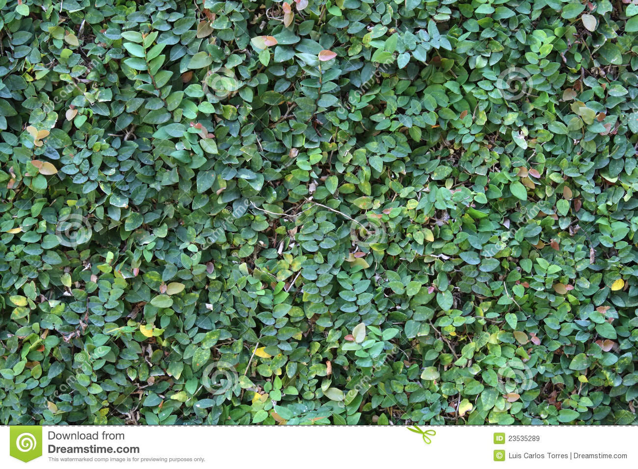 creeper plant royalty free stock images image 23535289