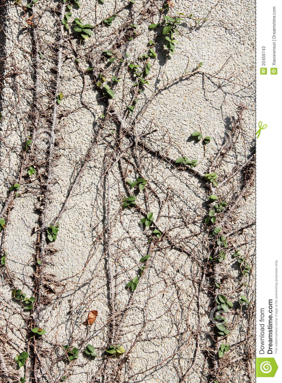 Vines On Wall Stock Photos Image 20459743