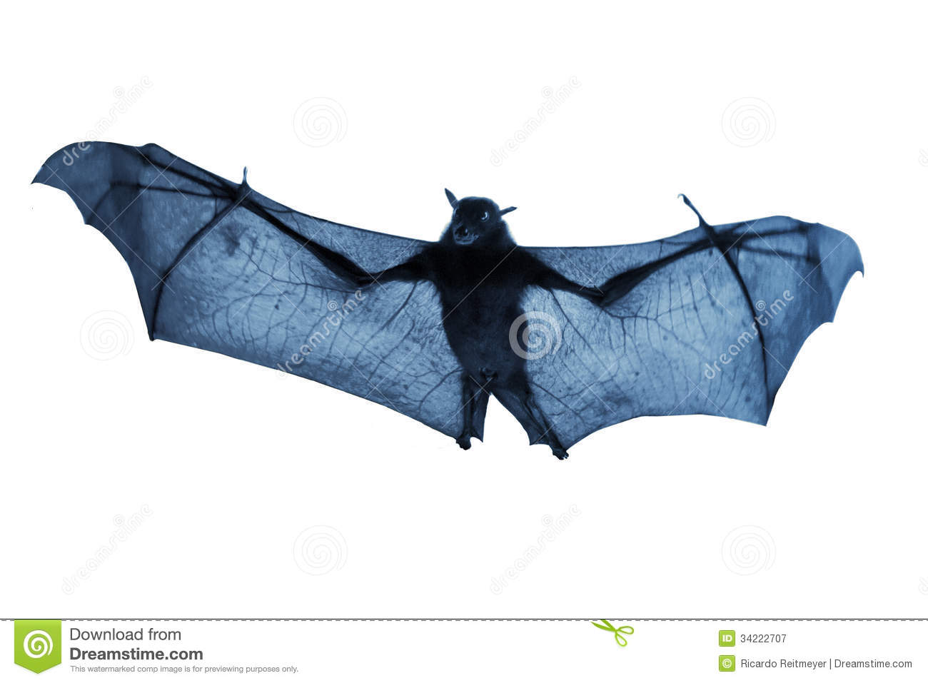 http://thumbs.dreamstime.com/z/creepy-blue-nighttime-flying-halloween-bat-isolated-white-real-life-now-tone-was-shot-its-wings-extended-34222707.jpg