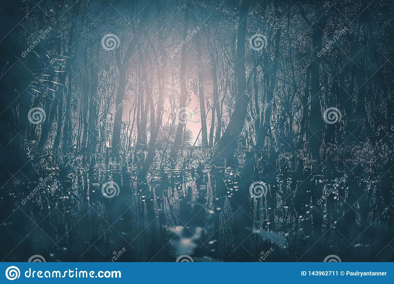A creepy Gothic moonlit foggy woods at night. Great for horror, Gothic, Creepy, and scary projects.