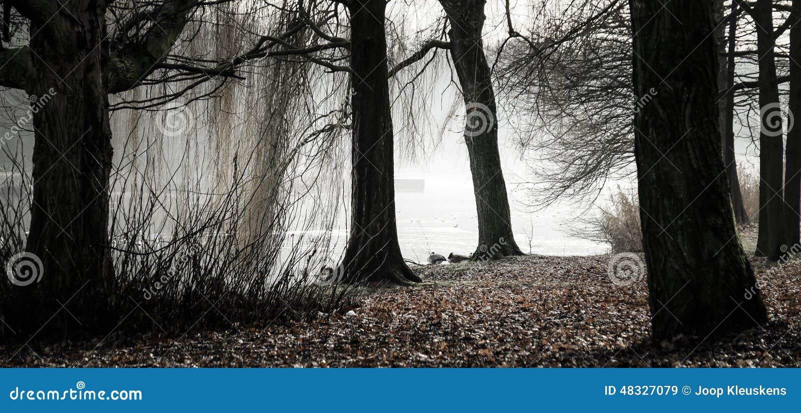 Creepy Forest Stock Photo  Image 48327079