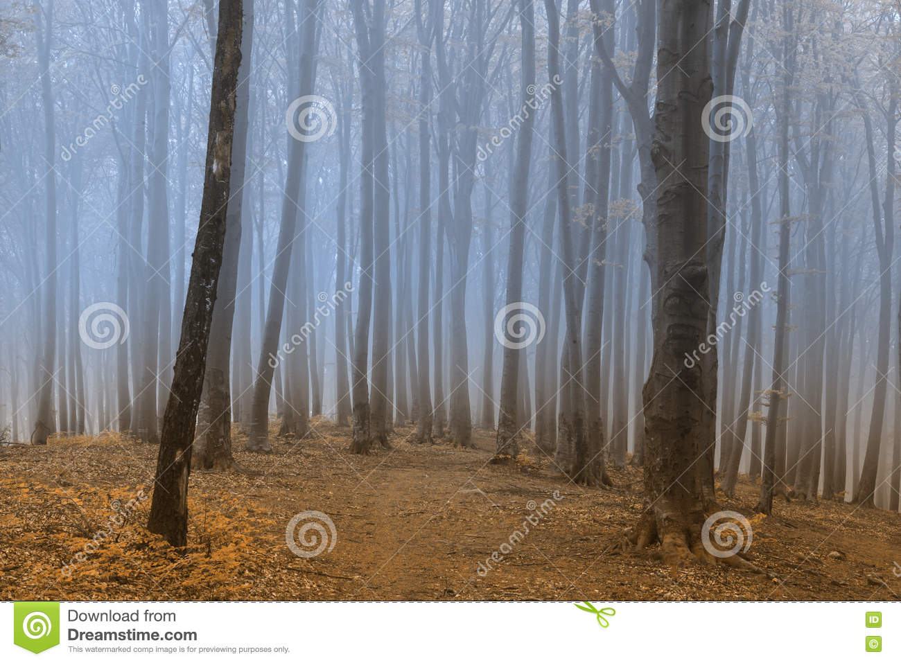 Creepy Road Into Foggy Forest Stock Image Image Of Season