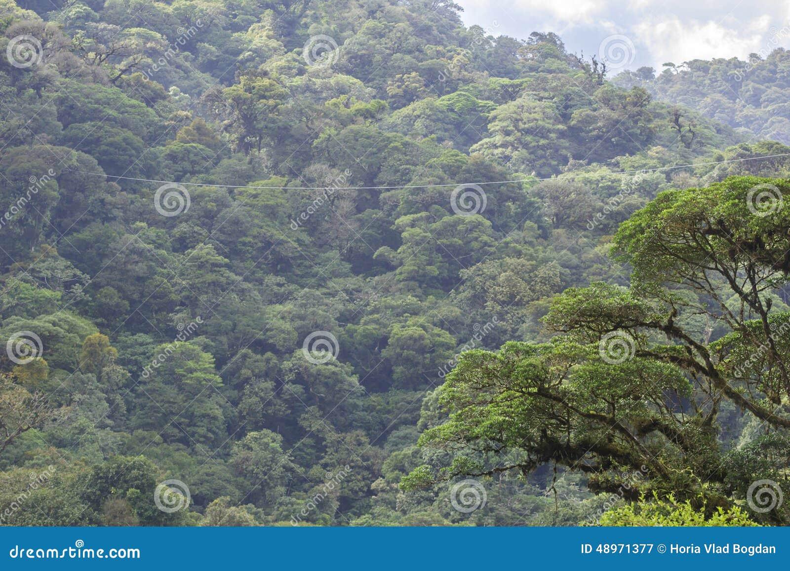 Cremallera-línea a través del nube-bosque de Costa Rica