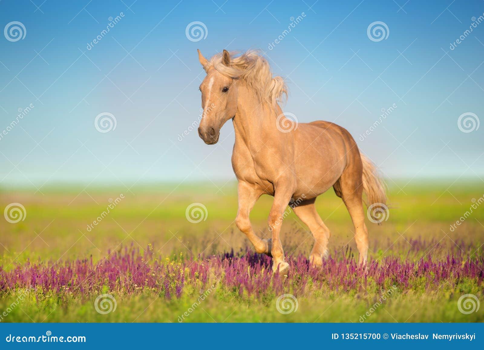 Cremello koń w kwiatach