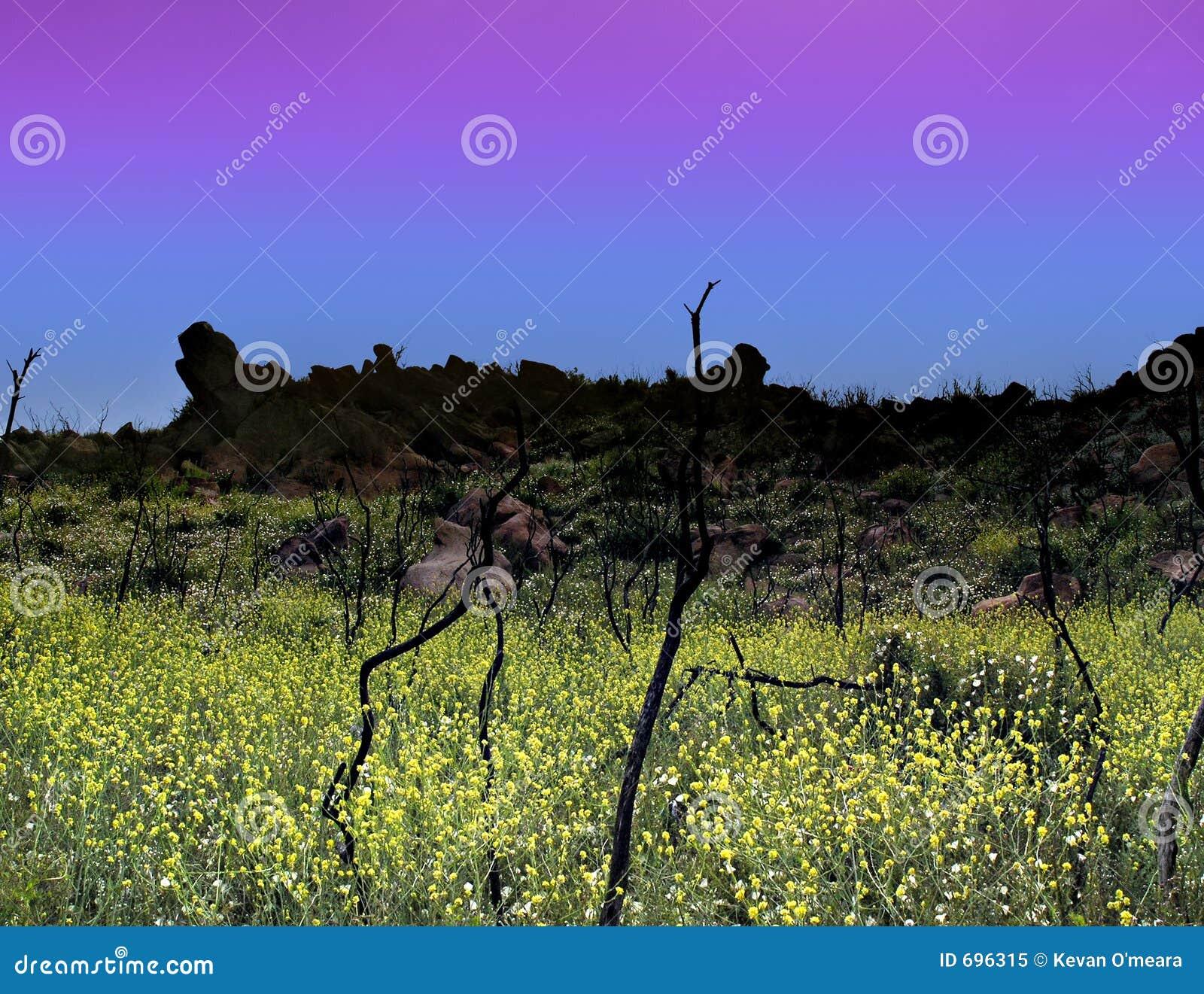 Crepúsculo azul e amarelo