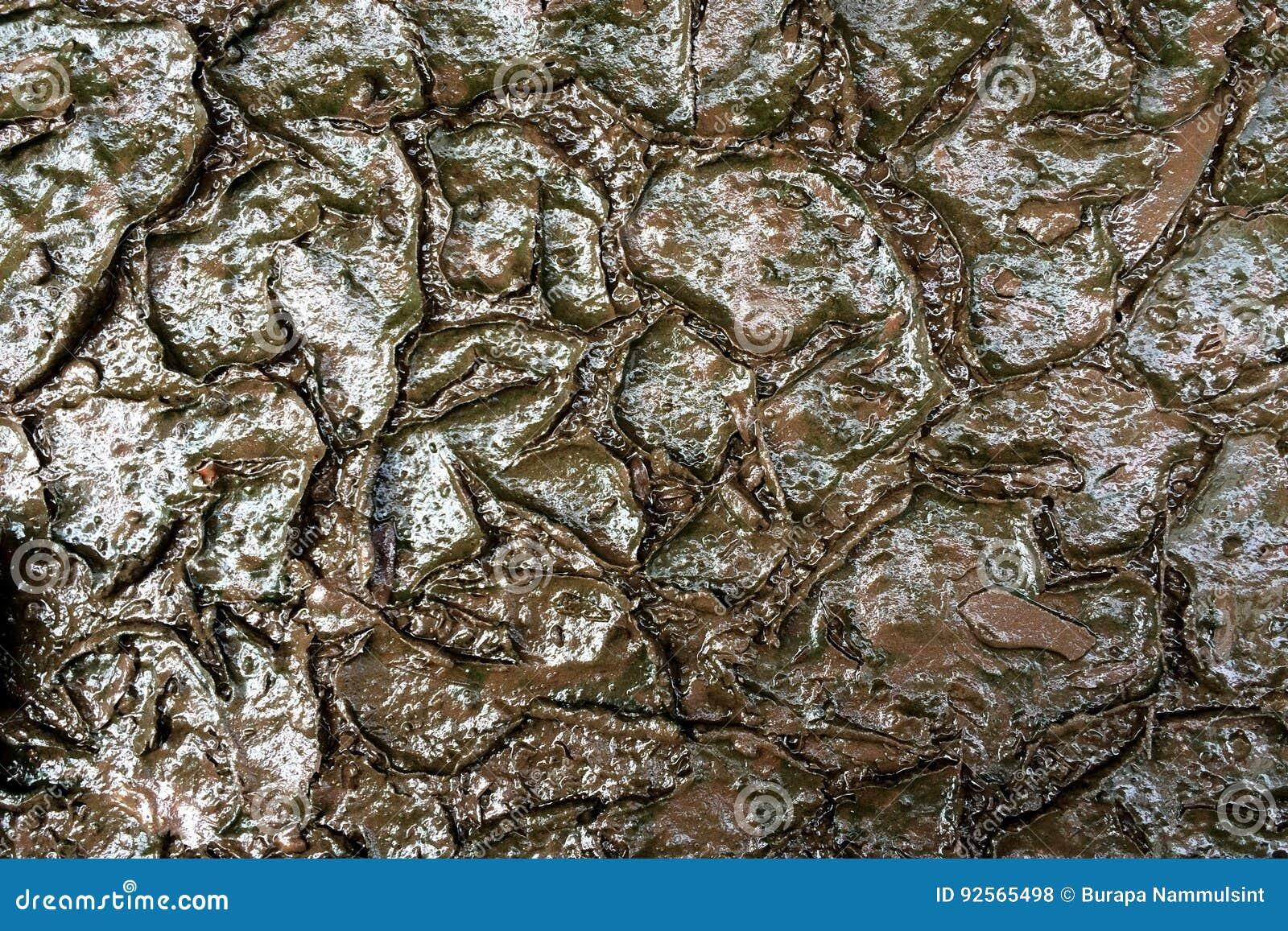Crepe bagnate del suolo di superficie