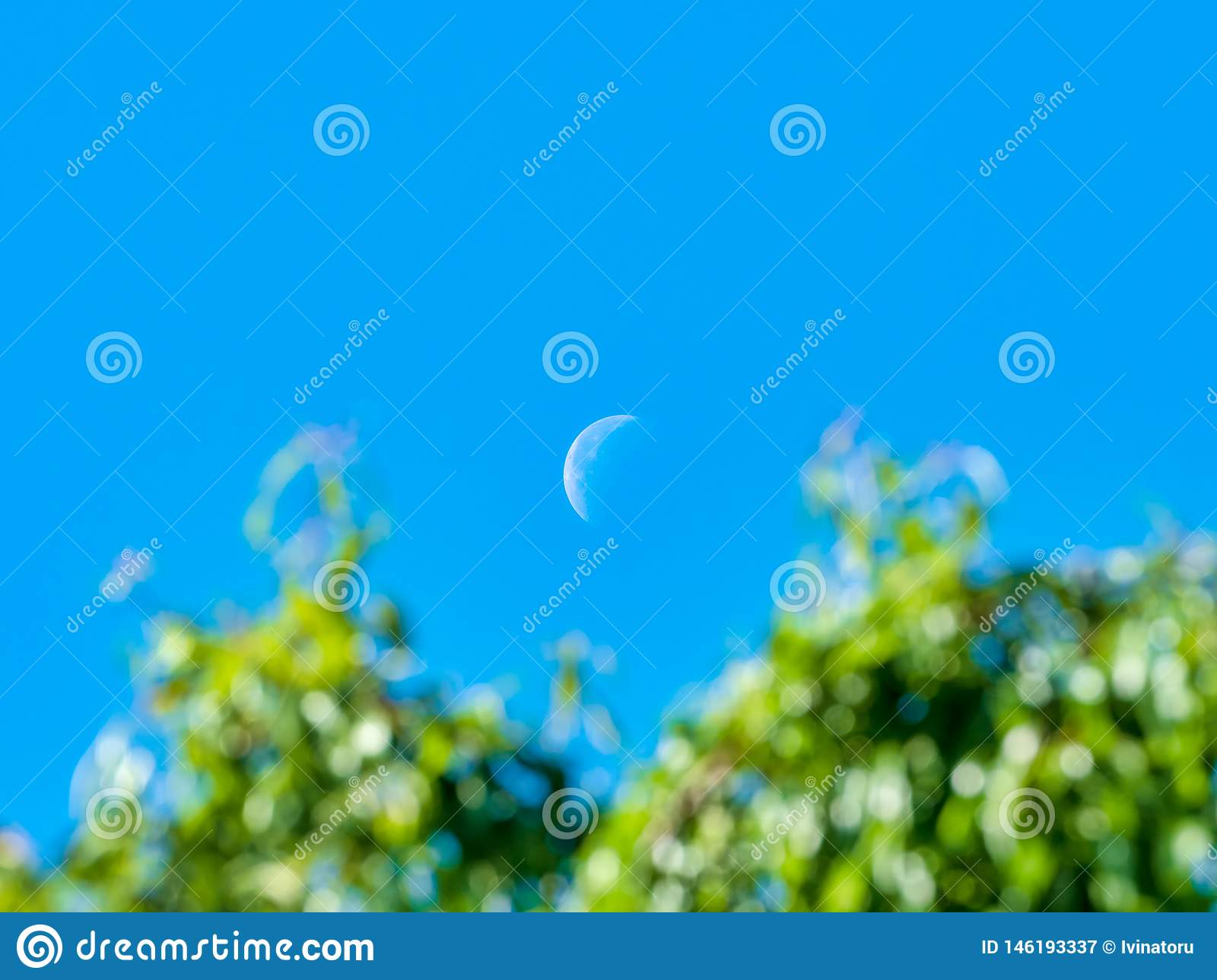 Scene with half day crescent moon and green tree branches in the foreground out of focus