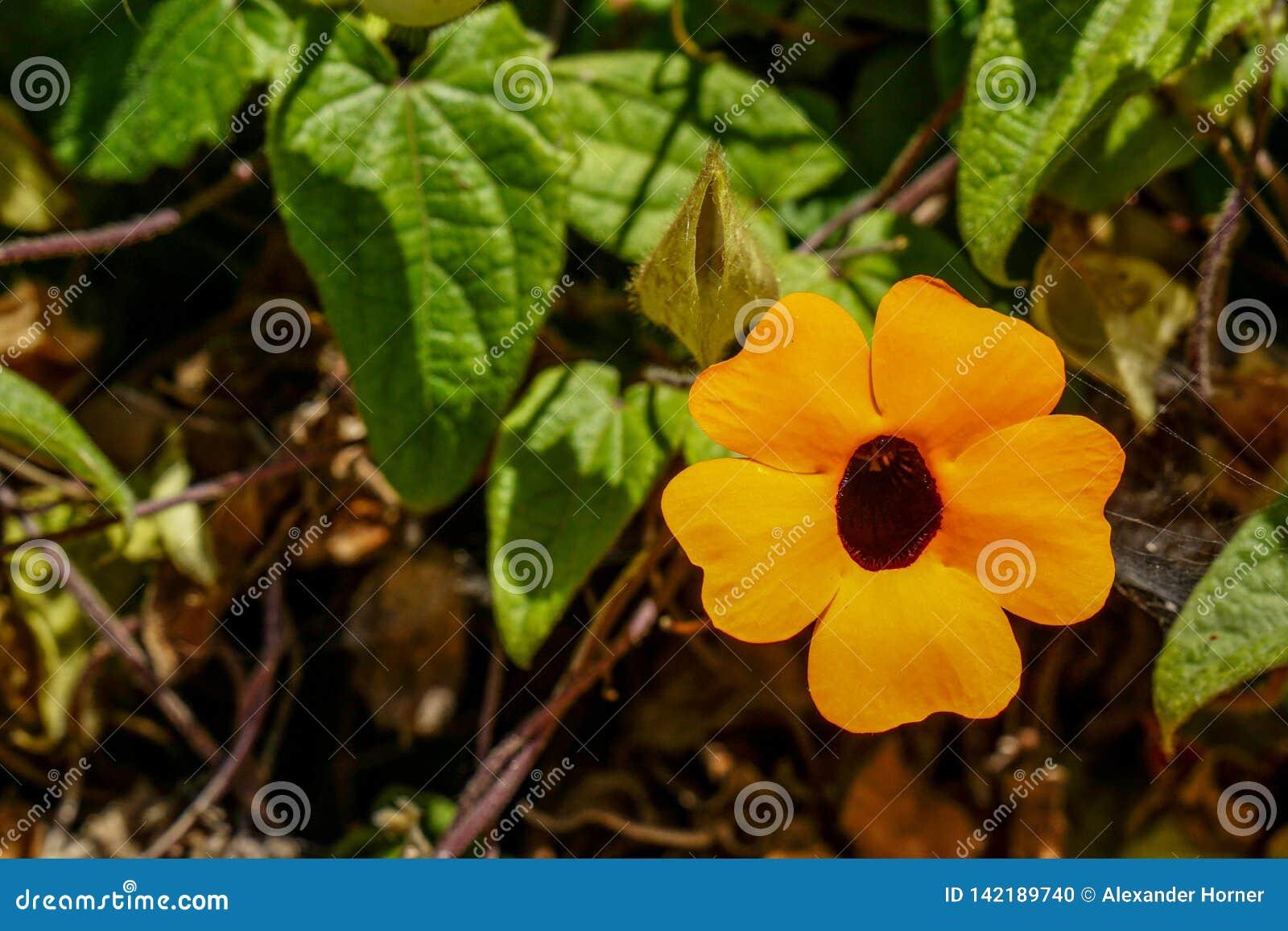 Crescimento de flor alaranjado amarelo em Califórnia