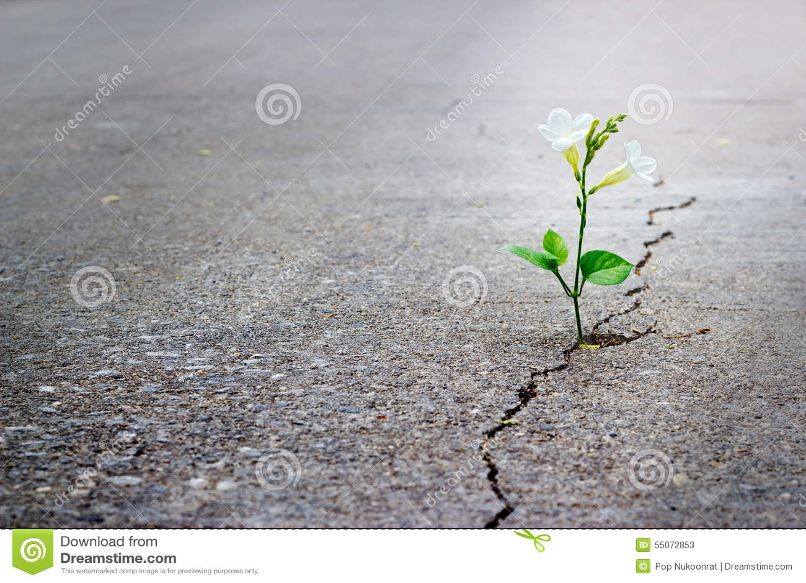 Crescimento de flor branca na rua da quebra, foco macio, texto vazio