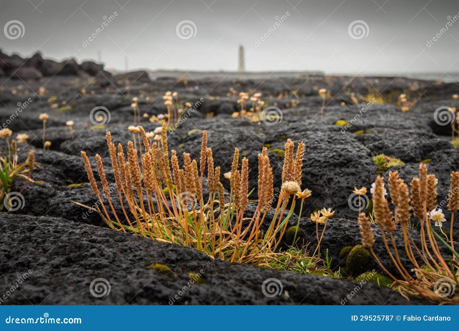 Crescimento de flores