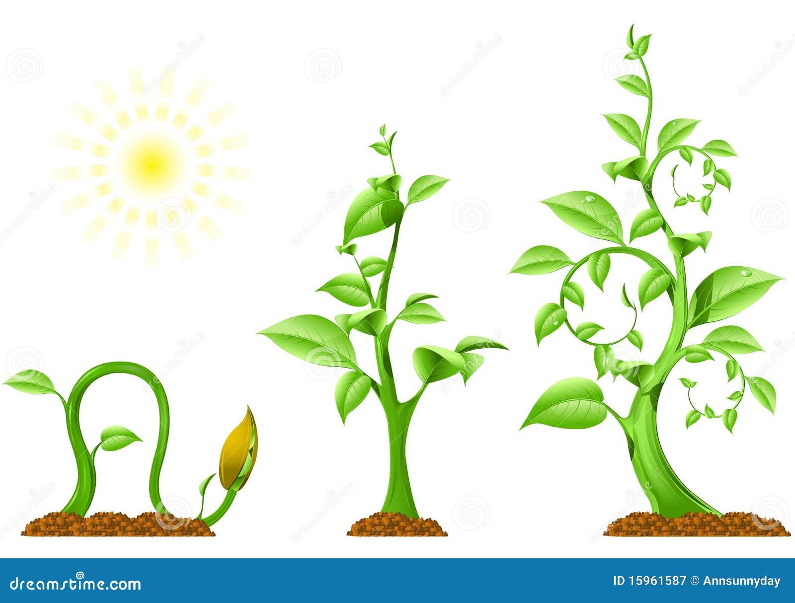 Crescimento de planta