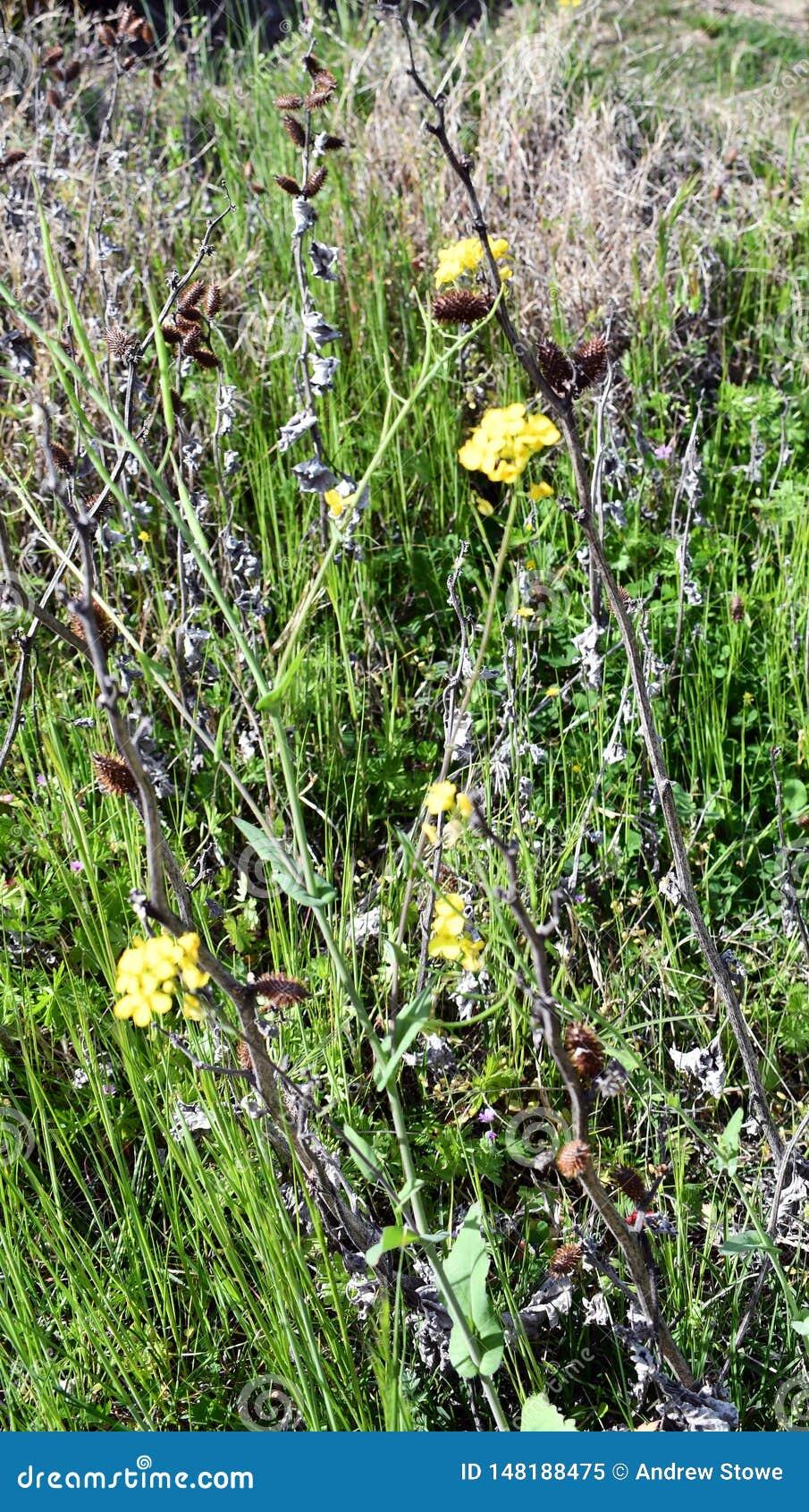 Crescita di fiori selvaggi nel deserto